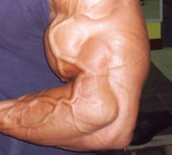 bicep-muscle